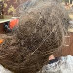 Bridget's post coma hair - a knotted and matted disaster.